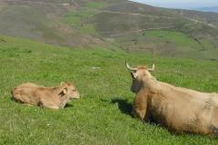 casa-martin-turismo-rural-asturias-muniellos-21
