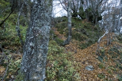 casa-martin-turismo-rural-asturias-muniellos-40