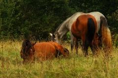 casa-martin-turismo-rural-asturias-muniellos-5