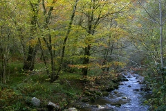 casa-martin-turismo-rural-asturias-muniellos-53