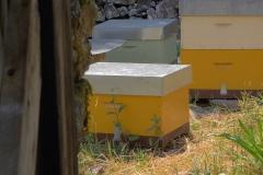 miel-natural-asturias-casa-martin-20