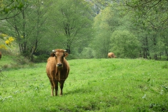 casa-martin-turismo-rural-asturias-muniellos-20